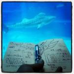 水族館とノートブック