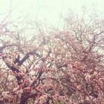 【ノートブックがない旅なんてVol.48】偕楽園 梅と緑