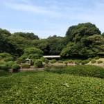 新宿御苑で植物スケッチ会