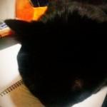 猫とノートブックと時々あれそれ
